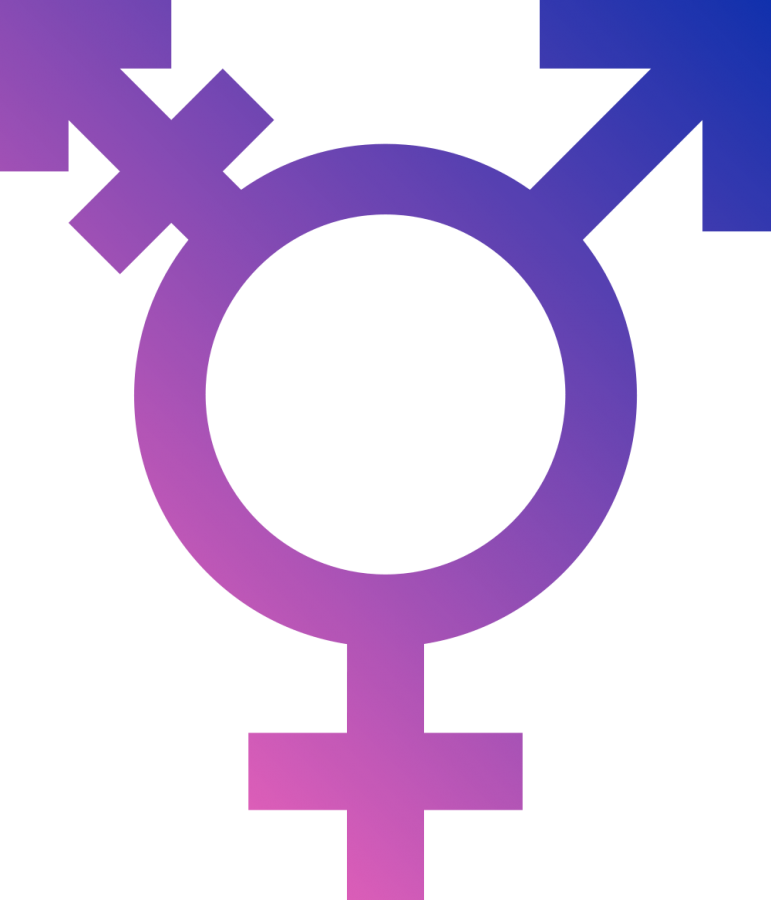 The+Gender+Experience