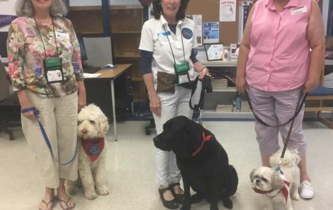 Therapy Dogs Doing Wonders