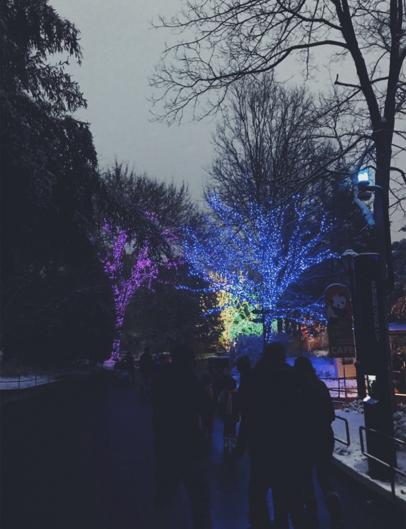 Picture was taken in 2017 at Zoo Lights. Photo credit to Ruth Dean.